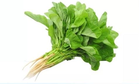多力丨吃草吃成沙拉精,但就是不掉称?低卡料理家来帮你~